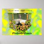 Poster de la fotosíntesis