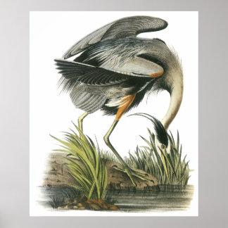 Poster de la garza de Audubon