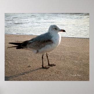 Poster de la gaviota de la playa