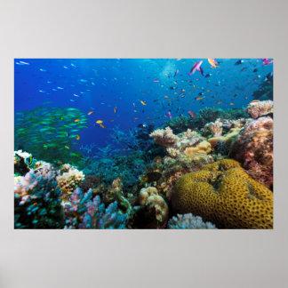 Poster de la gran barrera de coral