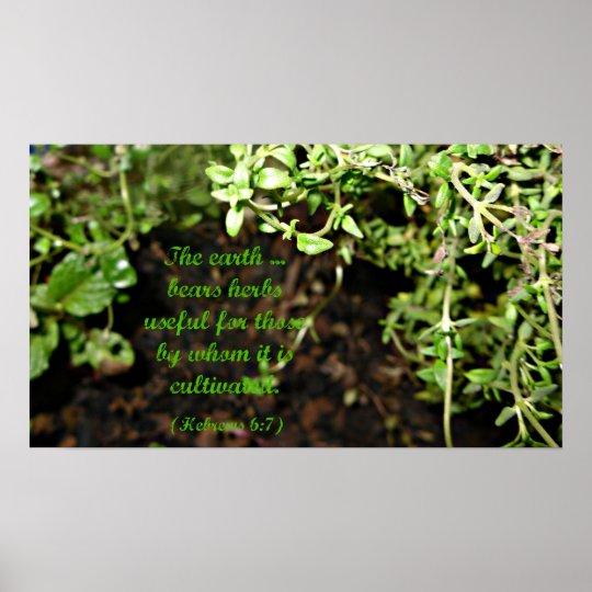 Poster de la hierba póster