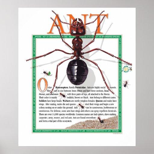 Poster de la hormiga