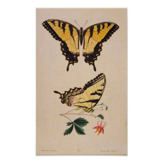 Poster de la imagen de la mariposa del vintage