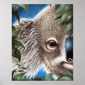 Poster de la koala de los objetos curiosos póster