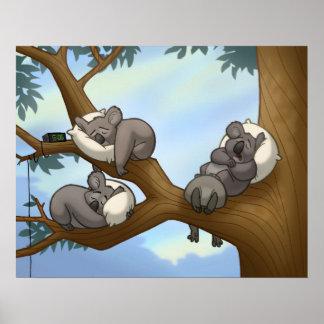 Poster de la koala el dormir