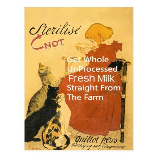 Poster de la leche del vintage del gatito postales