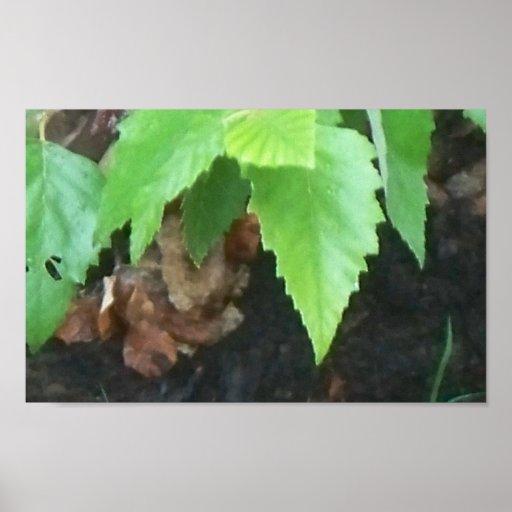 Poster de la lona de las hojas