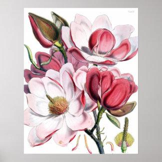 Poster de la magnolia