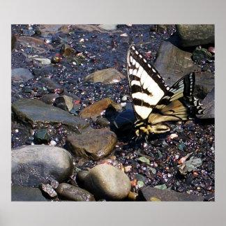 Poster de la mariposa 1 de Swallowtail del tigre Póster
