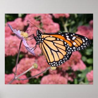 Poster de la mariposa de monarca I