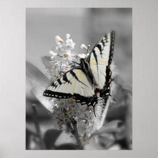Poster de la mariposa de Swallowtail Póster