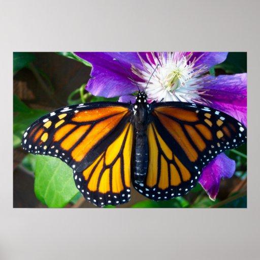 Poster de la mariposa del deslumbramiento