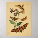 Poster de la mariposa del vintage