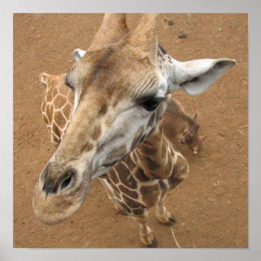 Poster de la mirada de la jirafa