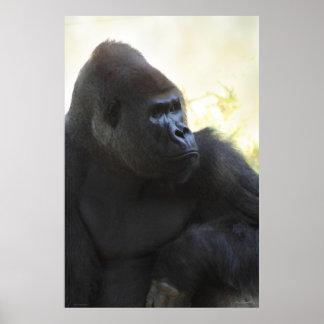Poster de la mirada del gorila