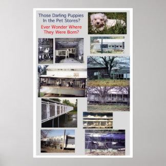 Poster de la miseria de la raza de los molinos del