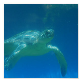 Poster de la nadada de la tortuga de mar