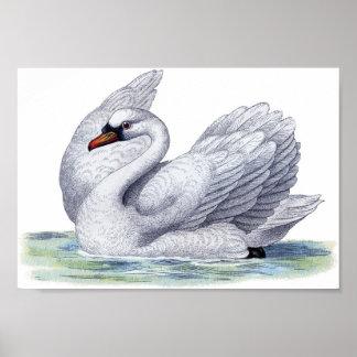 Poster de la natación del cisne del vintage