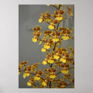 Poster de la orquídea