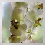 Poster de la orquídea que cuelga