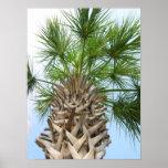 Poster de la palmera hermosa y del cielo azul