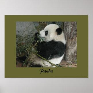 Poster de la panda