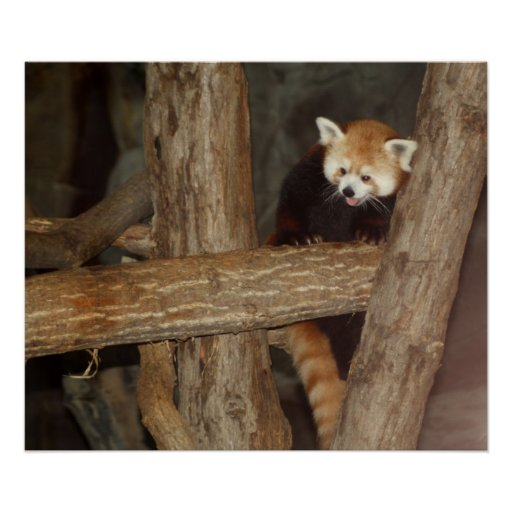 Poster de la panda que sube