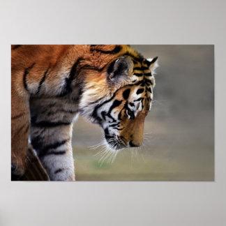 Poster de la pendiente de los tigres