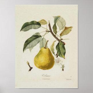 Poster de la pera del vintage
