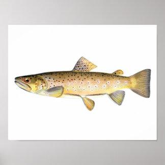 Poster de la pesca - pescado de la trucha de Brown