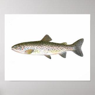 Poster de la pesca - pescado de la trucha de color