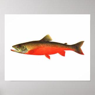 Poster de la pesca - pescado rojo canadiense del v