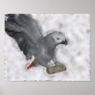 Poster de la pintura de la foto del loro del gris