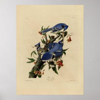 Poster de la pintura del Bluebird del vintage