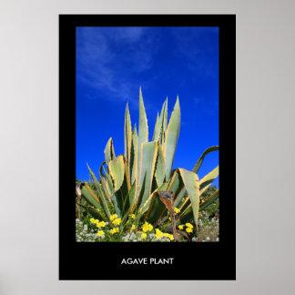 Poster de la planta del agavo, impresión