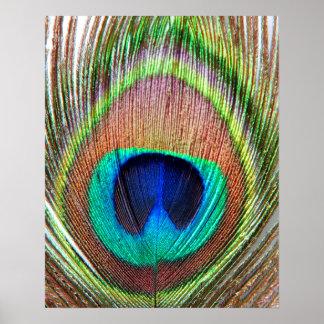 Poster de la pluma del pavo real