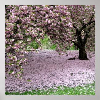 poster de la primavera de la flor de cerezo A