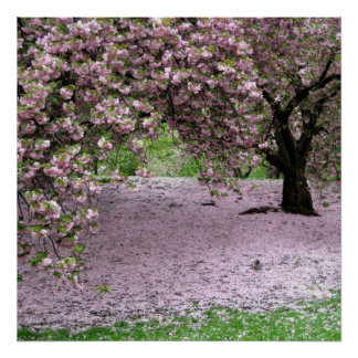 poster de la primavera de la flor de cerezo A PART