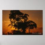 Poster de la puesta del sol de la sabana