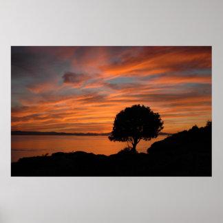Poster de la puesta del sol de Madrone