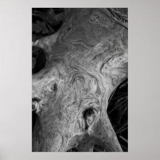 Poster de la raíz del árbol
