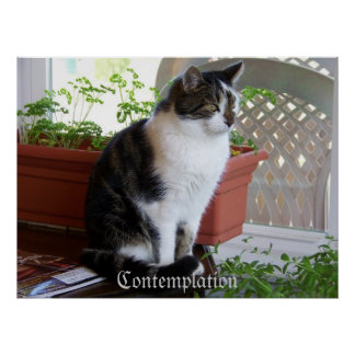 poster de la reflexión del gato