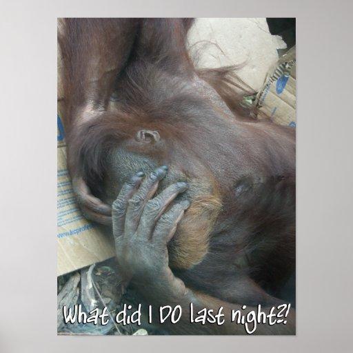 Poster de la resaca del orangután