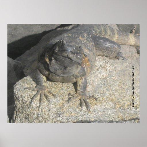 Poster de la roca del lagarto