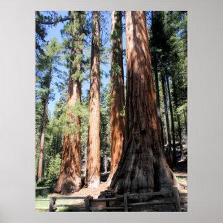 Poster de la secoya del parque nacional de Yosemit