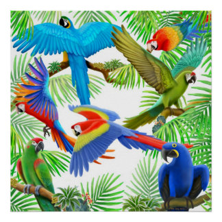 Poster de la selva del Macaw