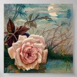 Poster de la serenata del rosa del claro de luna