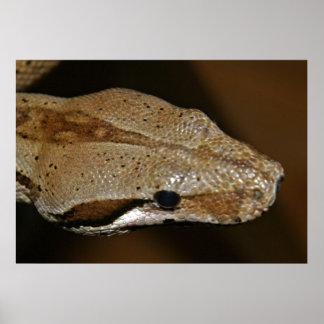 Poster de la serpiente