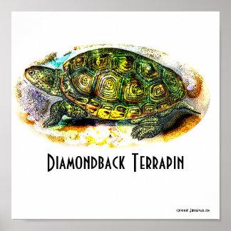 Poster de la Tejas-Diamondback-Tortuga acuática de