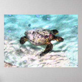 Poster de la tortuga de la natación